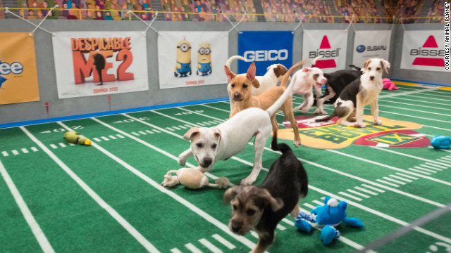 puppybowl2013_lifetimewithdogs