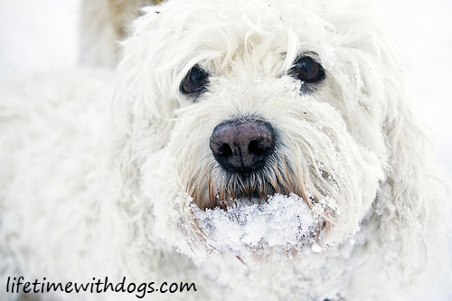snow_dogs_princess_2013_lifetimewithdogs