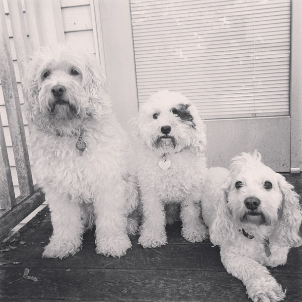 you_have_three_dogs_lifetimewithdogs