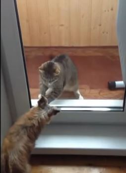 catdogglassdoor