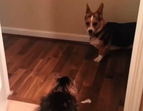 youshallnotpassdog_lifetimewithdogs