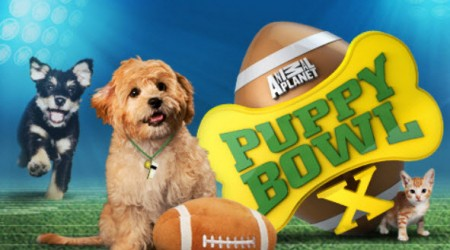 puppy_bowl_2014_animal_planet