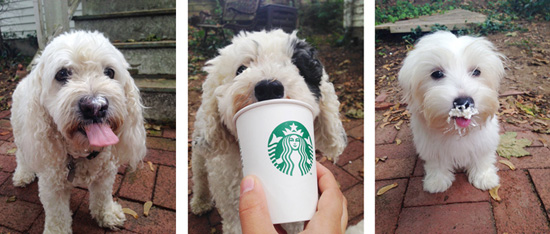 Puppuccino_Princess_Oliver_Daisy_LifetimeWithDogs