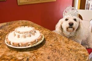 celebrating_ten_years_princess_lifetimewithdogs