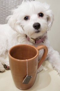 daisy_tea_thief_lifetimewithdogs