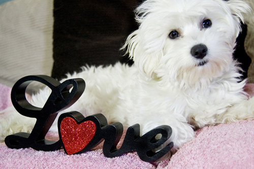 10 reasons your dog is the best valentine