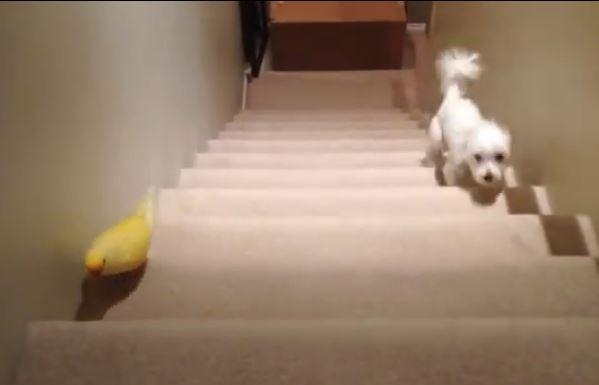 parrotvsdog_video
