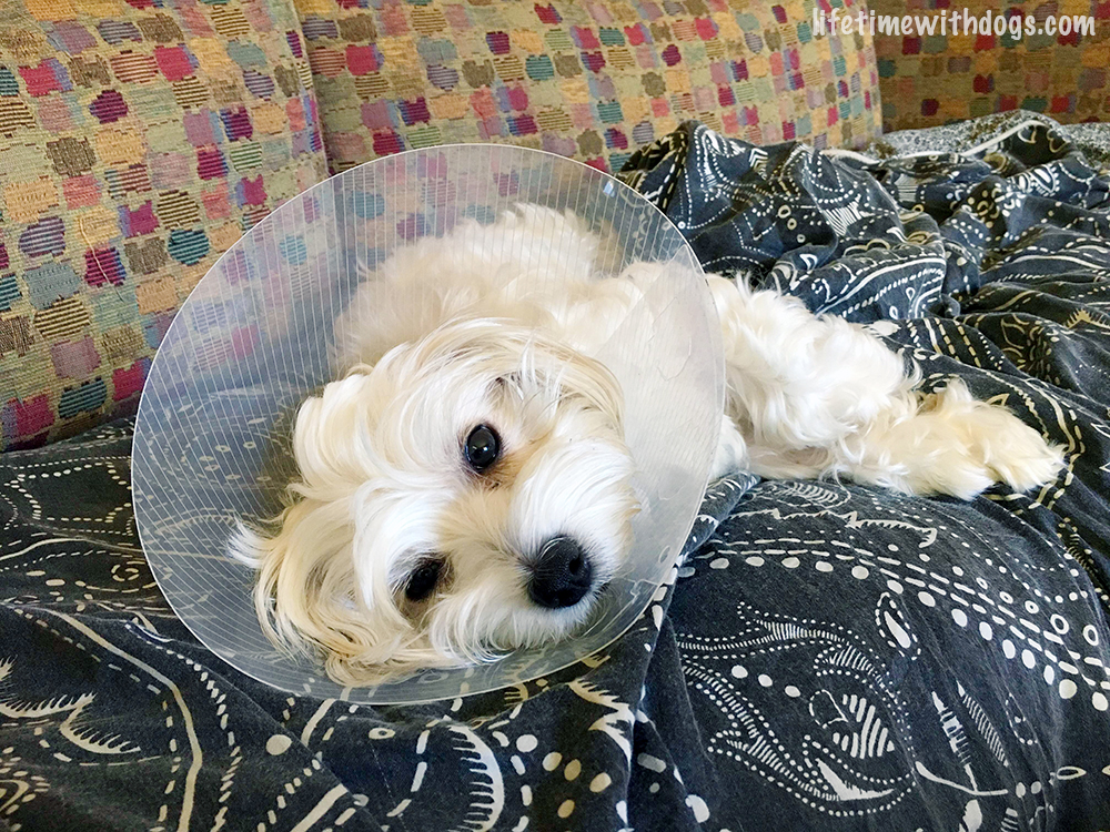 why i spayed my dog