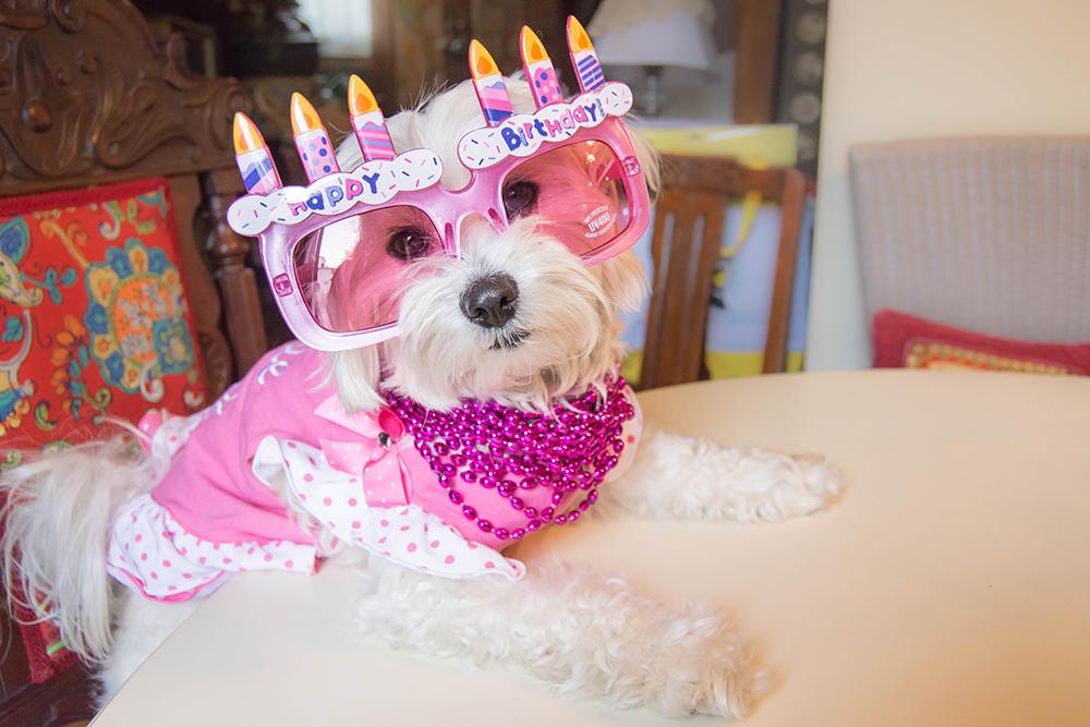 Daisy3rdbirthday