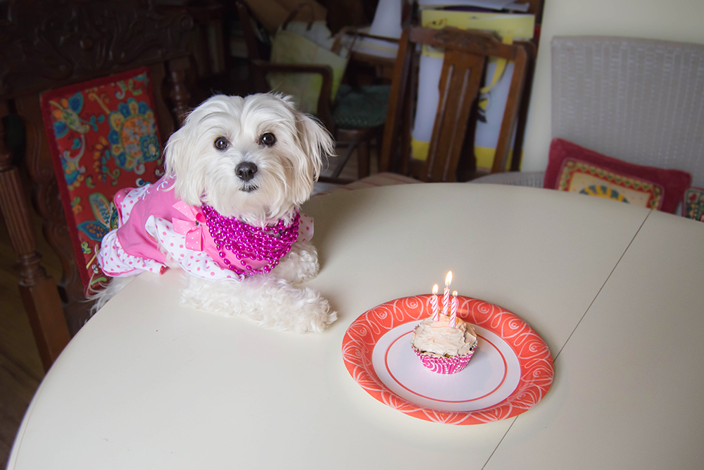 Daisy3rdbirthday_pumpkin_pupcakes