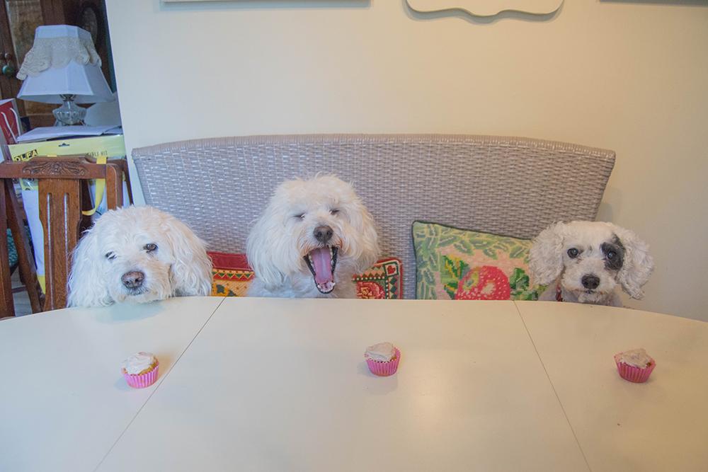 daisy3rdbirthday_pack_pupcakes