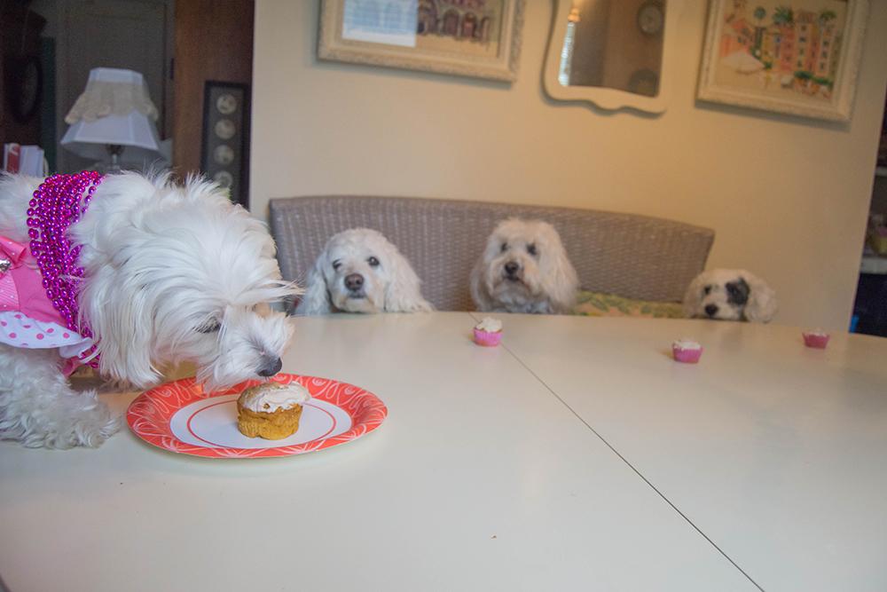 Daisy3rdbirthday_pupcake_pack