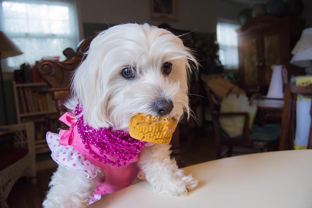 daisy3rdbirthday_pupcake